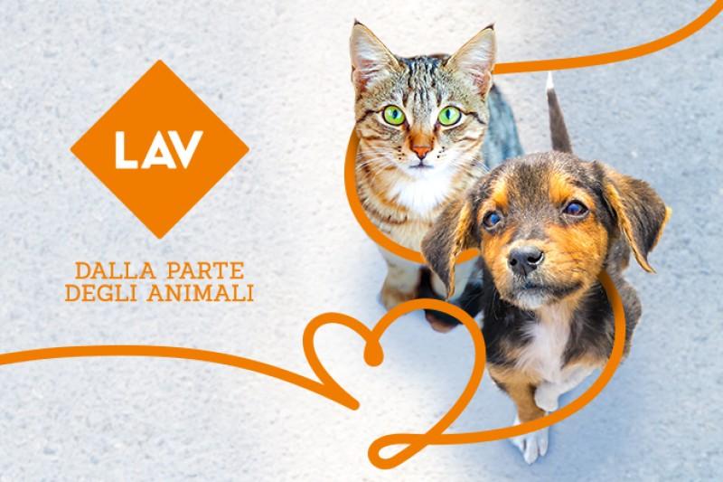 Gli animali non sono un lusso: saremo in piazza il 10-11 e 17-18 marzo