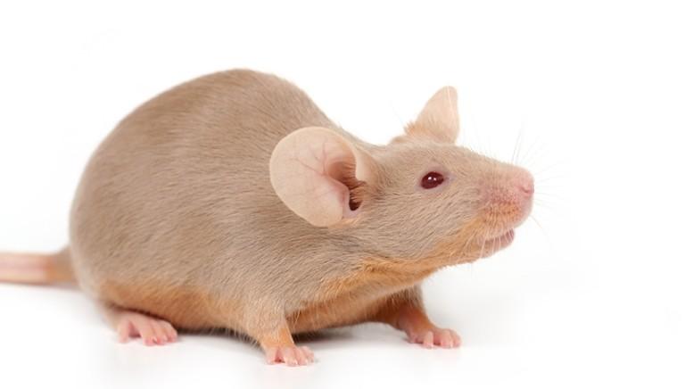 Test in vitro per studio obesità: la ricerca innovativa, affidabile ed etica