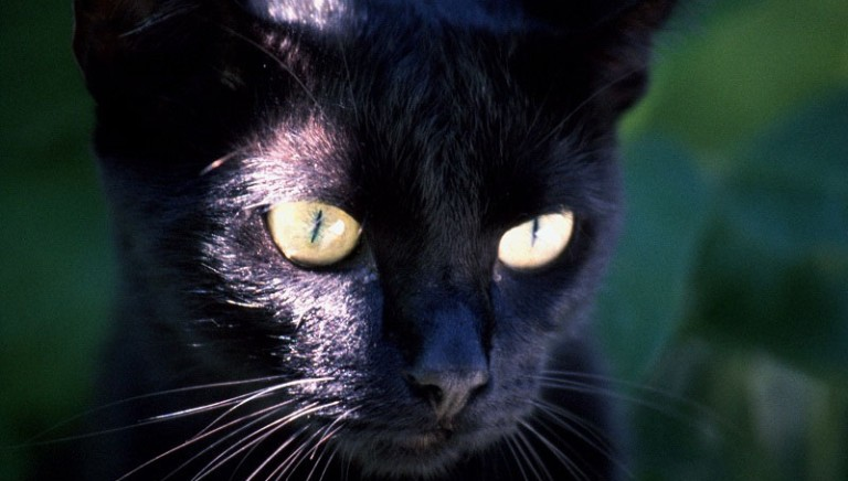 Perugia, gatto scuoiato: Procura ricorre in Appello contro assoluzione