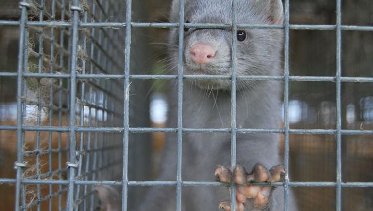 San Francisco vieta commercio di pellicce: quando anche in Italia?