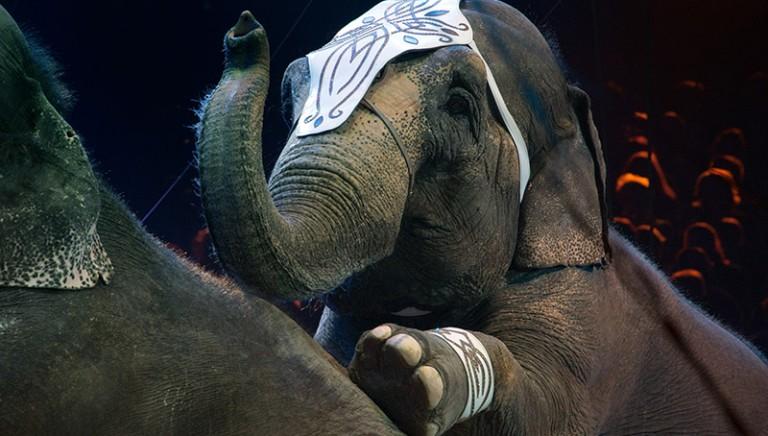 Elefante circo in fuga: rischio sicurezza. Urgente attuare Legge dismissione animali