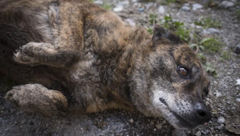 LAV e Comune di Palermo insieme per il progetto adozioni a favore dei cani randagi