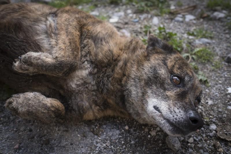 Tigrina ha circa 8 anni. Il suo sguardo racconta una vita di solitudine in canile, che tuttavia non le ha fatto perdere fiducia nei confronti dell'uomo. Speriamo non passi inosservata