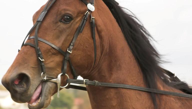 Messina: corse clandestine di cavalli. Corte d'Appello conferma condanne