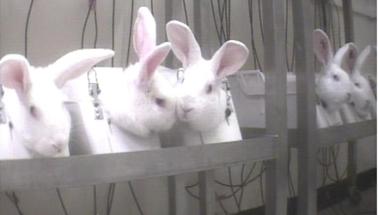 Parlamento Europeo chiede divieto mondiale per test cosmetici su animali
