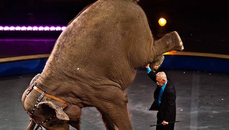 Ex domatore denuncia il circo con animali. Governo attui nuova Legge entro l'anno!