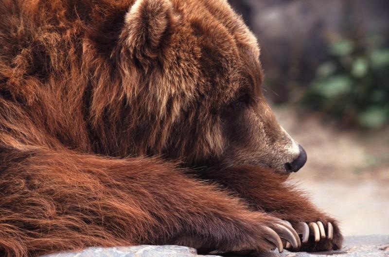 Orso ucciso da fucilata in Abruzzo: chiediamo riforma della sentenza di assoluzione
