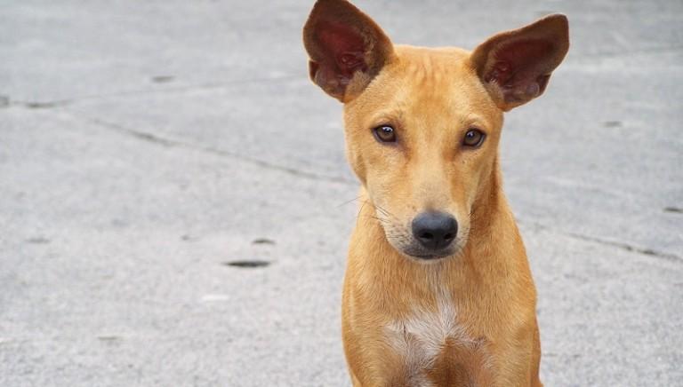 Microchip, annullare le dannose Linee guida dei Servizi veterinari di Agrigento e Caltanissetta