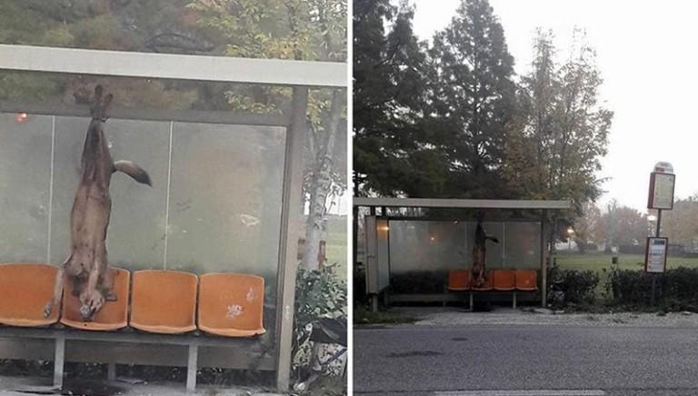 Lupo ucciso a Coriano (Rimini): due denunciati. Ci costituiremo parte civile