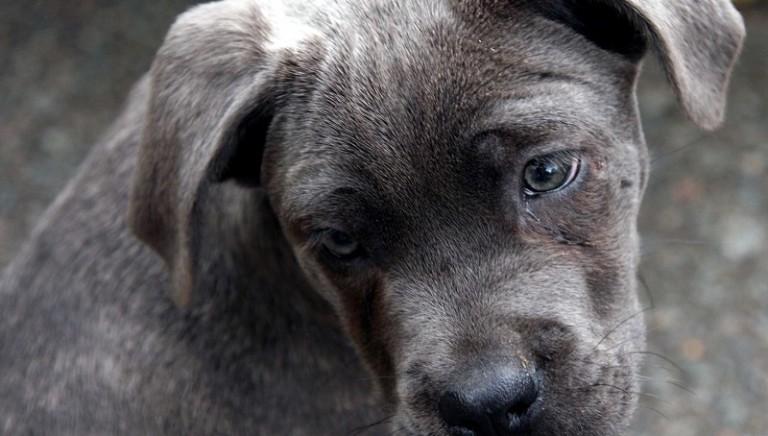 Udine, traffico cuccioli: confermata in appello condanna a 5 mesi per commerciante