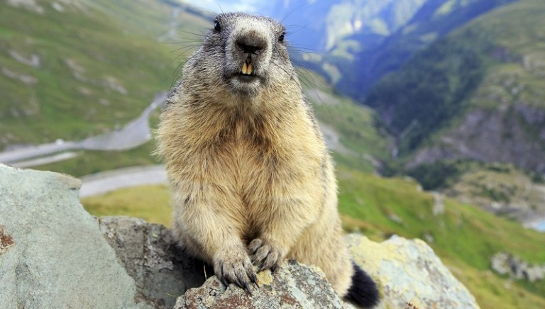 Sentenza storica: uccisione animali protetti va risarcita, il nostro commento