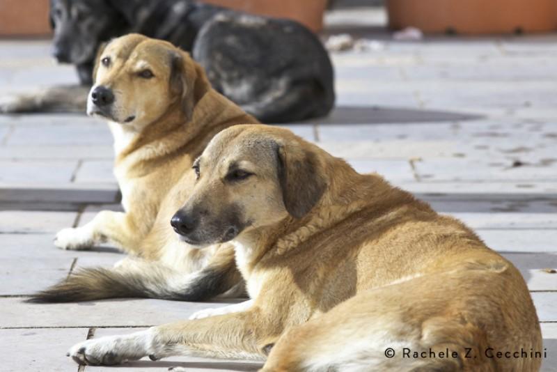 Lampedusa, allestimento ambulatorio veterinario: inizia fase operativa del progetto per i cani dell'Isola