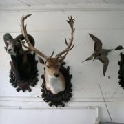 Sequestro di fauna protetta (C) Carabinieri