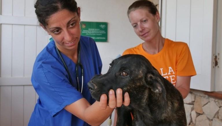 Lampedusa: veterinari e volontari in campo, presto un presidio permanente
