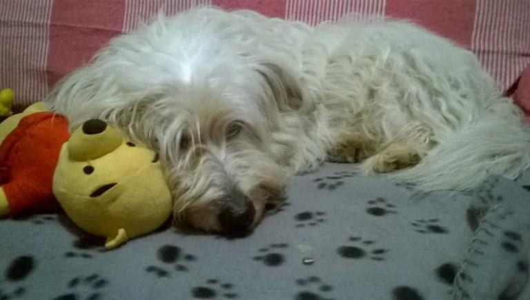 Lillo, il cane che ha rischiato di finire... Invece è rimasto con la sua famiglia