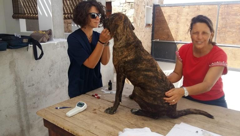 In missione per i cani di Lampedusa: primo bilancio e prossime azioni