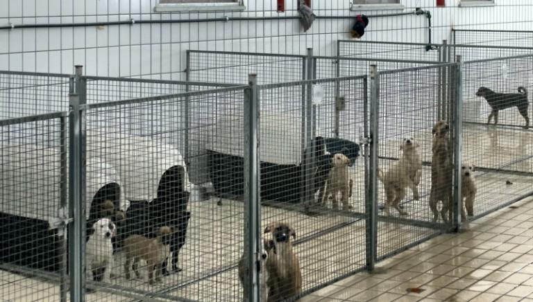 Il Parco degli Animali del Comune di Firenze apre le porte ai cani di Palermo