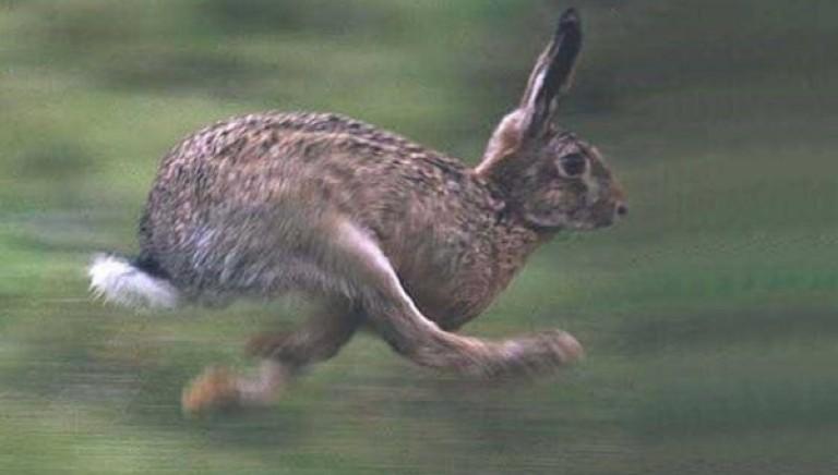 Ricorso al TAR contro la caccia a Lepri, Pernici sarde e Conigli selvatici