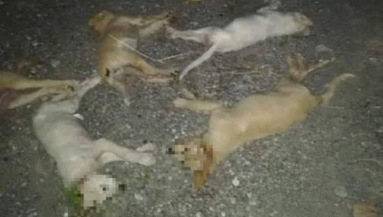Strage di cuccioli a Messina: subito una legge contro i bocconi avvelenati