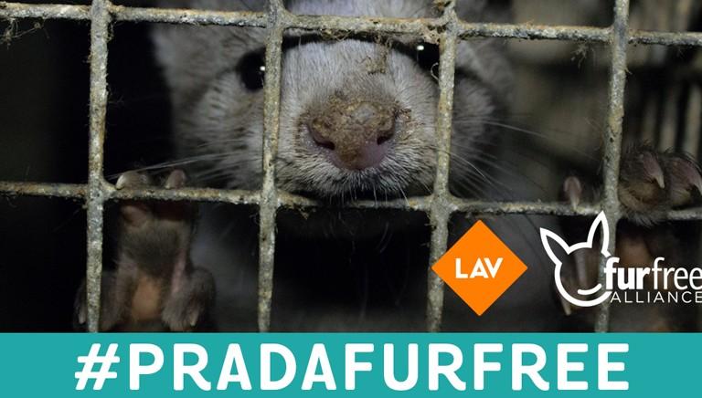 Prada, è ora di passare al fur-free!