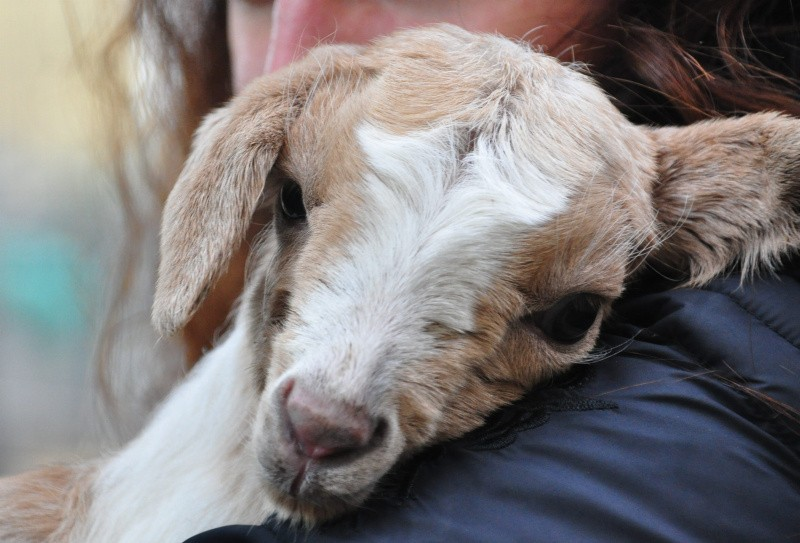 Cascina di Signa: salvi per sempre tutti gli animali. Nessuno potrà macellarli!