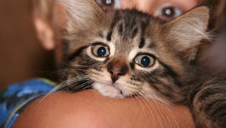 """L'Europa si prenda cura dei nostri amici animali: la campagna """"EU Care for our Companions"""""""