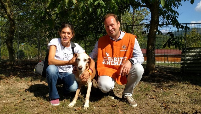Terremoto: inauguriamo una nuova casa per cani anziani e disabili a Camerino