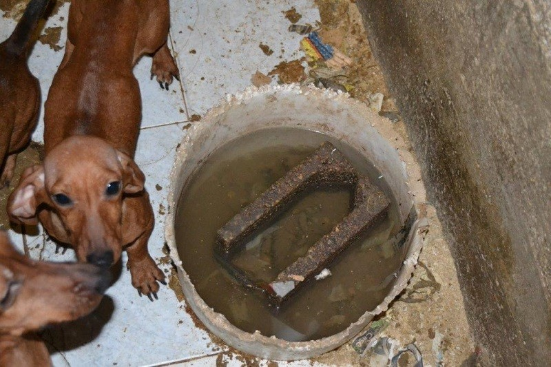 Orrore in provincia di Verona: processo per maltrattamento di oltre 350 animali