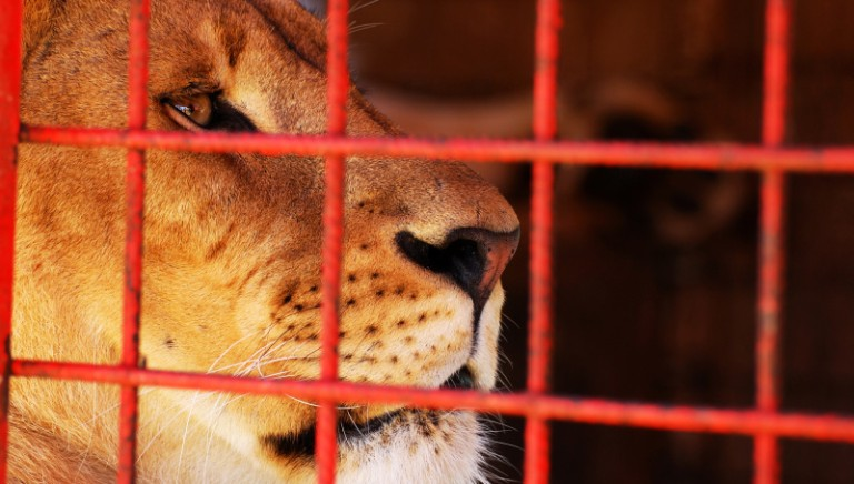 Lion Ark, Ministero dell'Istruzione promuove proiezione nelle scuole organizzata da LAV