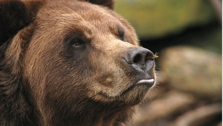 Tar accoglie ricorso Associazioni: no a caccia nel versante laziale del Parco Nazionale Abruzzo, Lazio, Molise