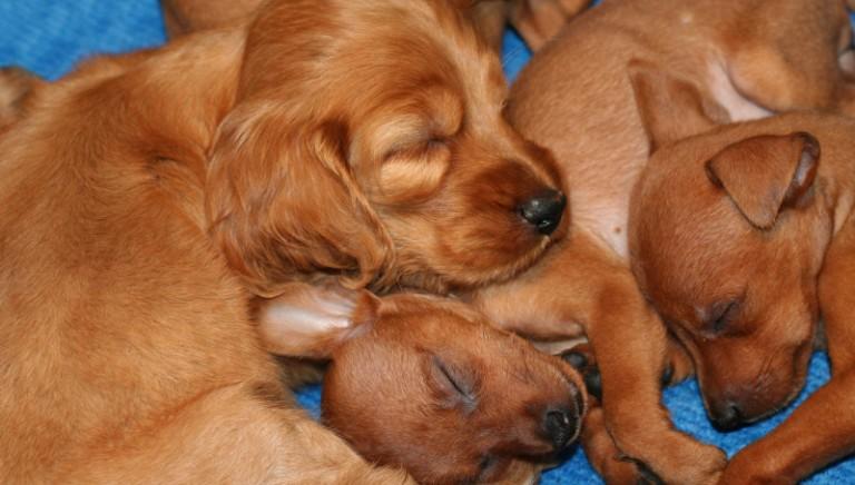 Napoli: maxi processo per traffico cuccioli, nove persone rinviate a giudizio. LAV parte civile