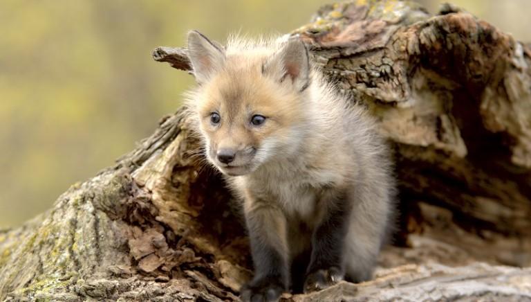 Il vero lusso è fur-free: anche COACH dice no alle pellicce