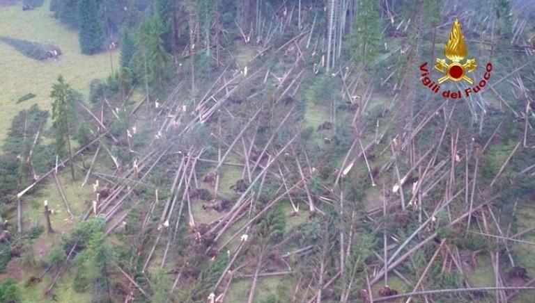 Associazioni: Governo dichiari subito stato di calamità anche per fauna e sospenda la caccia