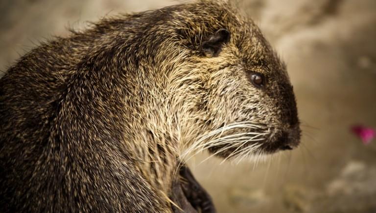 Basta uccisioni: animali selvatici non siano capro espiatorio di errori umani!