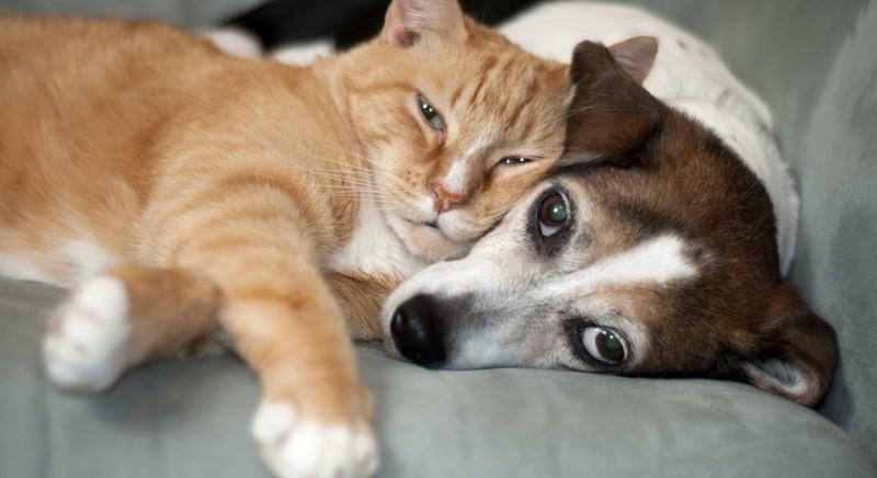 #IPIÙTASSATI: emendamenti a Legge di bilancio. Gli animali non sono beni di lusso