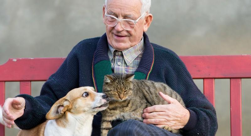 Il Consiglio comunale di Mantova vota mozione a sostegno sgravi fiscali per cure cani e gatti
