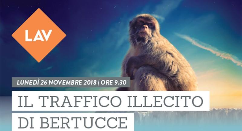 Il traffico illecito di Bertucce: il 26 novembre Conferenza a Roma