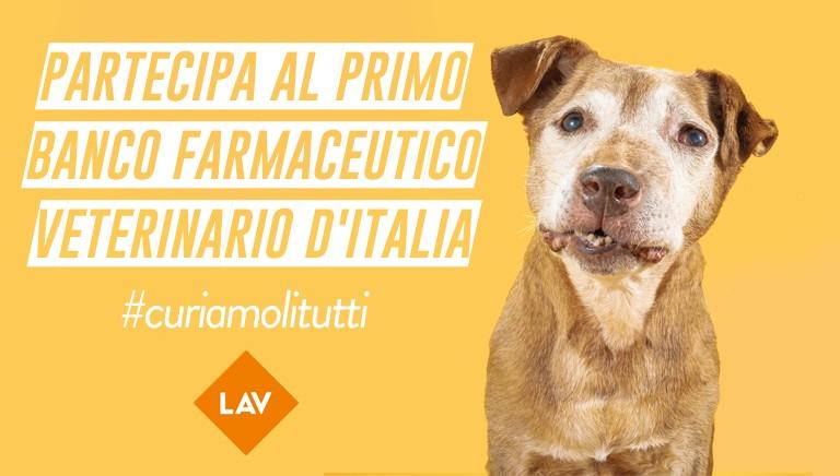 #CURIAMOLITUTTI: 8-16 dicembre, il Banco farmaceutico veterinario LAV