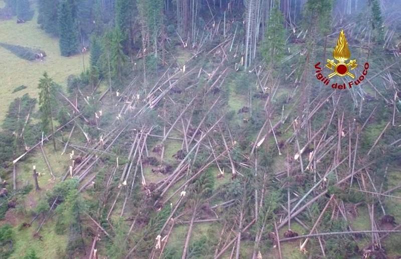Foreste distrutte dall'uragano: il 1 dicembre manifestazione anti caccia