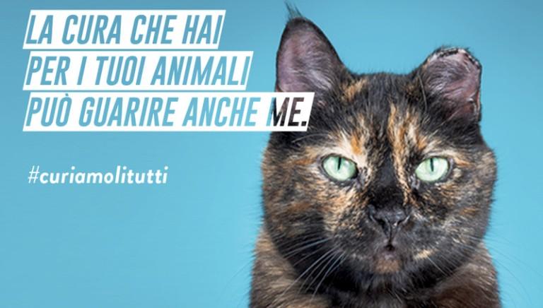 #CURIAMOLITUTTI: con i farmaci che raccoglieremo dall'8 al 16 dicembre, aiuteremo 4000 cani e 3500 gatti