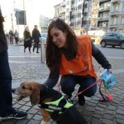 LAV Milano con  Merlino, uno dei beagle ex Green Hill