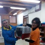 gatto portato presso il presidio veterinario di Progetto Isola