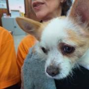 Un cucciolo curato da LAV a lampedusa