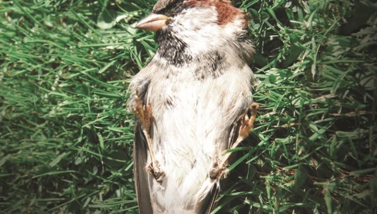 La Corte Costituzionale conferma: la caccia non ha alcun valore ambientale!
