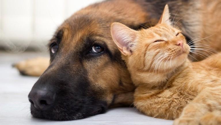 Rapporto Eurispes 2019: italiani più consapevoli e sensibili verso gli animali