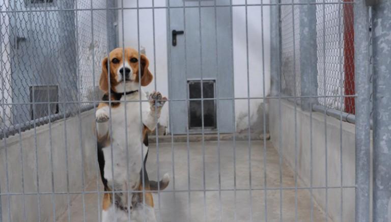 Sperimentazione animale, pubblicati i dati 2017: in aumento cani e primati