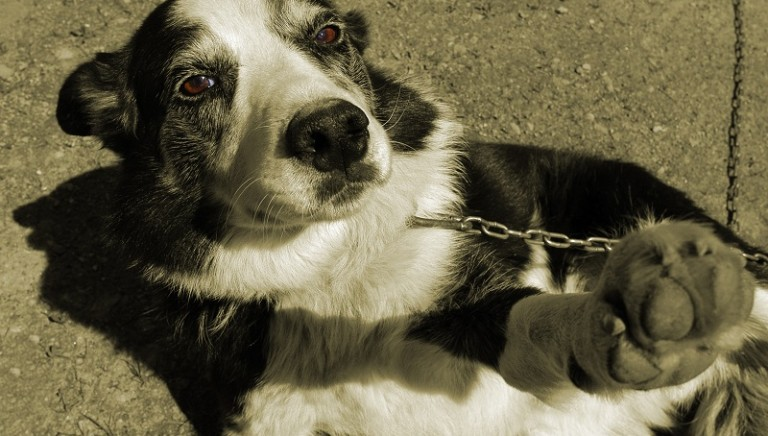 Animali e tutela giuridica, il nostro intervento alla John Cabot University