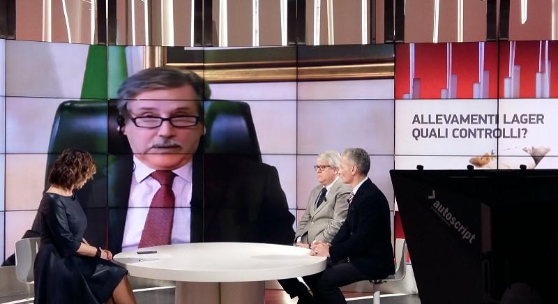 Investigazione suini, primi risultati: a Tg2 Ministero Salute annuncia sanzioni