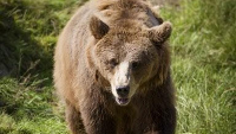 Uccisione orsa KJ2: ci opponiamo alla richiesta di archiviazione