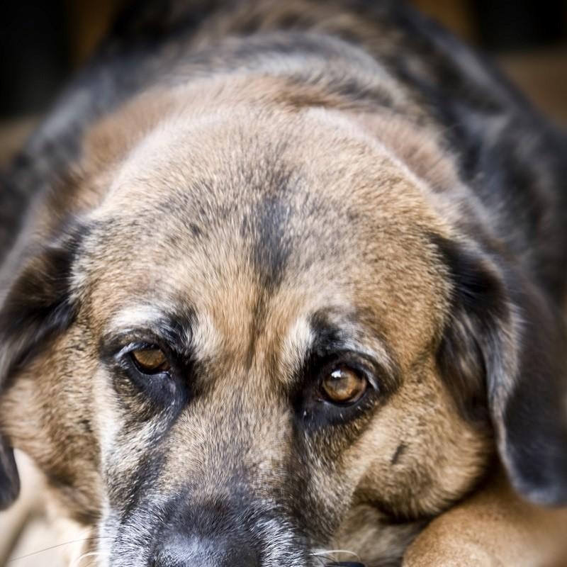 Multa di 10 mila euro per il massacro di due cani: chiediamo pene più severe!